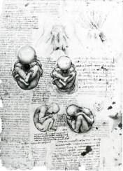Leonardo da Vinci, Anatomical Drawings.