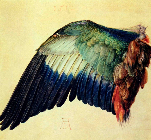 Durer's watercolour of a birds wing.