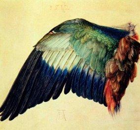 Durer's watercolour of a birds wing.