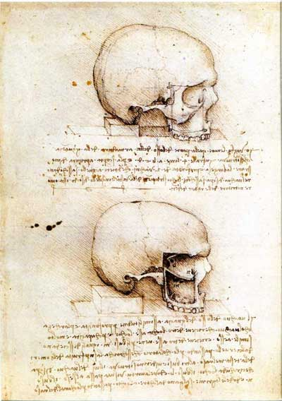 Two skulls by Leonardo da Vinci