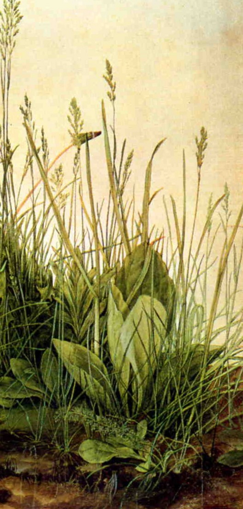 Durer's sketch of a piece of turf, watercolour. 1503.