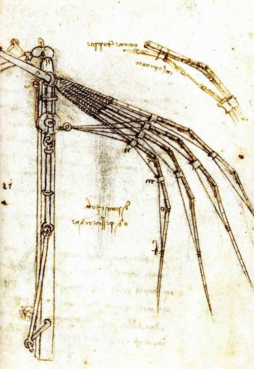 An articulated wing study by Leonardo da Vinci.