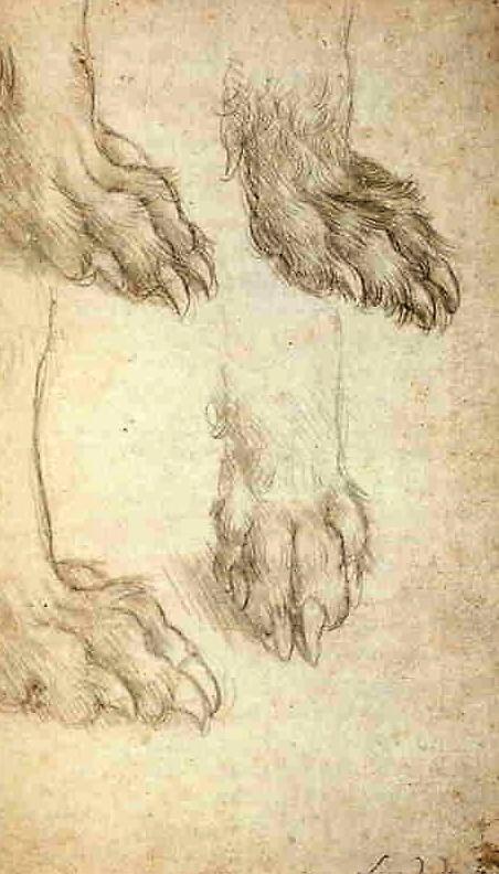Leonardo's study of a dog's paws.