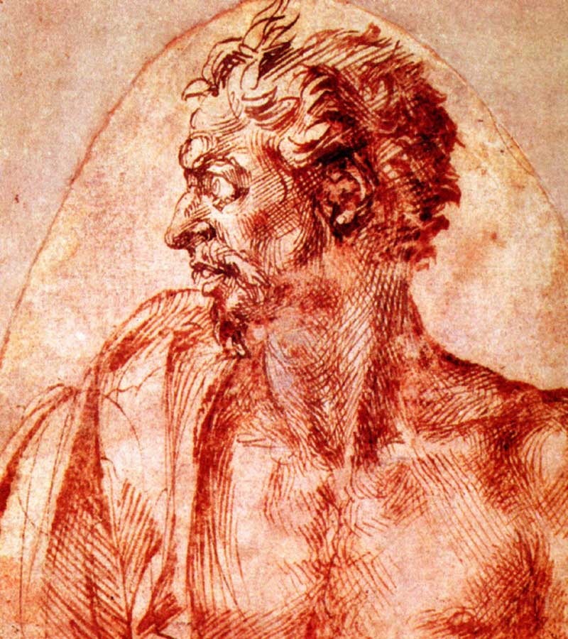 Study of a man in profile, Michelangelo