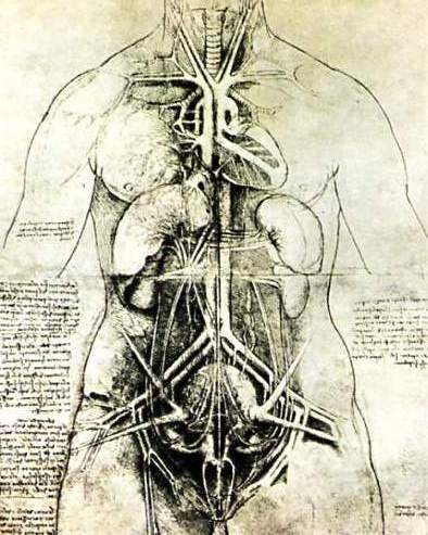 Leonardo Drawings A Study Of Anatomy From The Renaissance Master