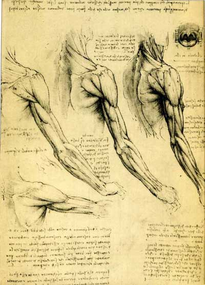 leonardo drawings, a study of anatomy from the Renaissance master