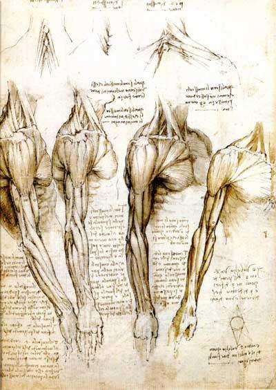 leonardo drawings, a study of anatomy from the Renaissance master