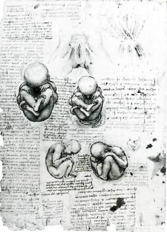 Foetus by Leonardo da Vinci