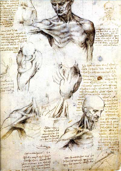 Study of a man's shoulder and neck by Leonardo da Vinci