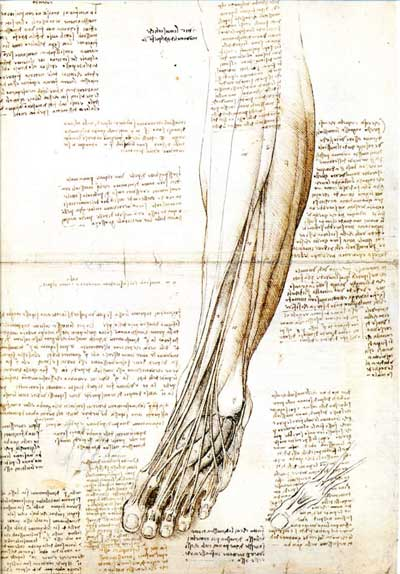 Foot and lower leg by Leonardo da Vinci